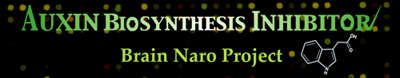 Auxin biosynthesis and its inhibitors (BRAIN NARO project) (Japanese Only)